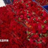 云南食用玫瑰鲜花墨红