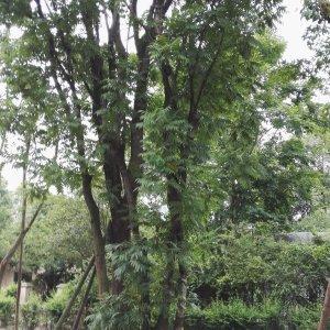 复古黄连木民族丛生毛线袜图片