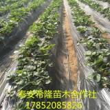 山东哪有卖章姬草莓苗的