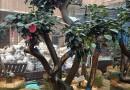 茶花地苗  高度2米,冠幅1,2米  价格200元