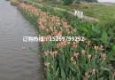 生态浮岛  人工浮岛 植物浮岛
