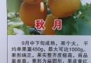 供应新优品种梨树苗