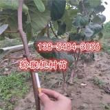 猕猴桃树苗多少钱一棵