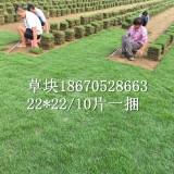 湖南结缕草 马尼拉草规格及图片