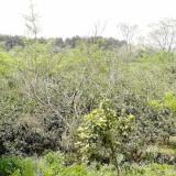 桔子树橘子树