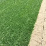 黑麦草坪每平方米多少钱 江苏黑麦草草坪价格