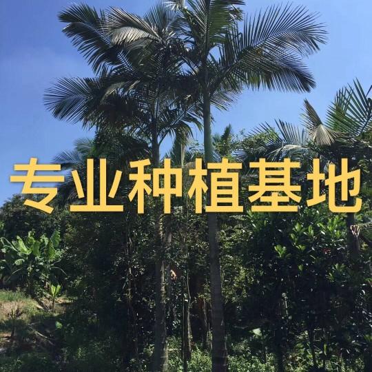 假槟榔批发价格 假槟榔树