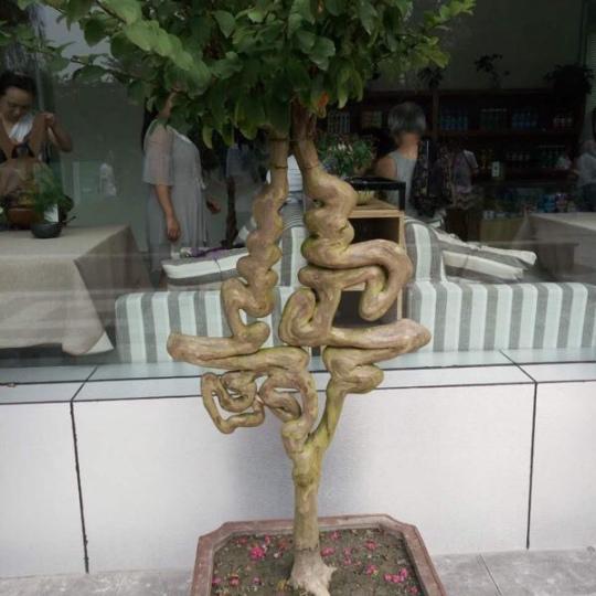 福禄寿禧造型发财树