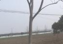 麦冬 中叶麦冬草 四季常青 地被开花植物