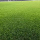 草坪种子马尼拉四季不修剪