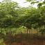 江苏常年供应构树