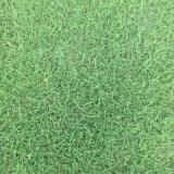 马尼拉草坪多少钱一平方 马尼拉草坪价格