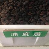 油麻藤种子(牛马藤种子)