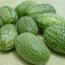 拇指西瓜种子供应