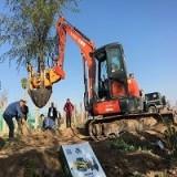 常青挖树机 瓣式移树机带主根出树机 四铲式移树机