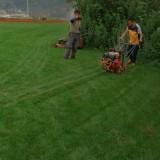 绿化草皮 黑麦草