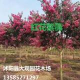 地径3-15公分红花紫薇