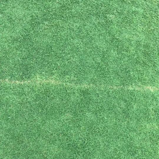 马尼拉草坪价格 江苏草坪基地