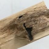 20公分沉香树价格 广东沉香树多少钱一棵