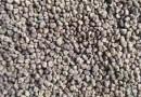 榉树种子多少钱一斤 批发榉树种子价格