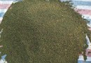 优质榉树 榉树苗价格 榉树批发
