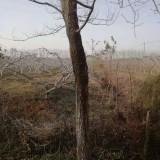 精品榆树苗 江苏10公分榆树 榆树苗批发
