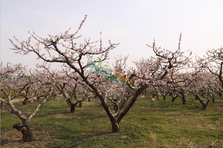 果树类:桃树,梨树,李子树, 苹果树等.