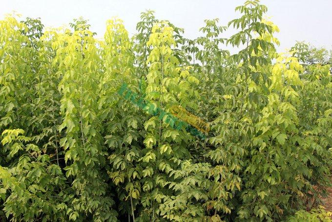 壁纸 成片种植 风景 植物 种植基地 桌面 680_454