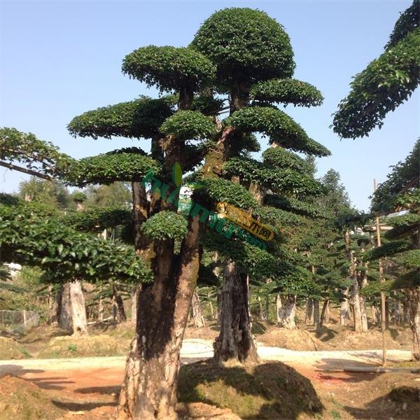 树的造型图案大全图片