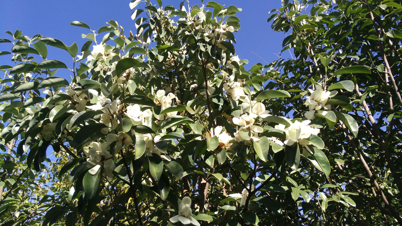 壁纸 果树 花 树 植物 桌面 3000_1687