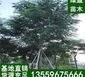 华安县绿盈苗木种植场.jpg