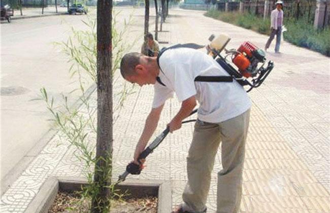 园林蛀干害虫光肩星天牛防治技术及防控方法