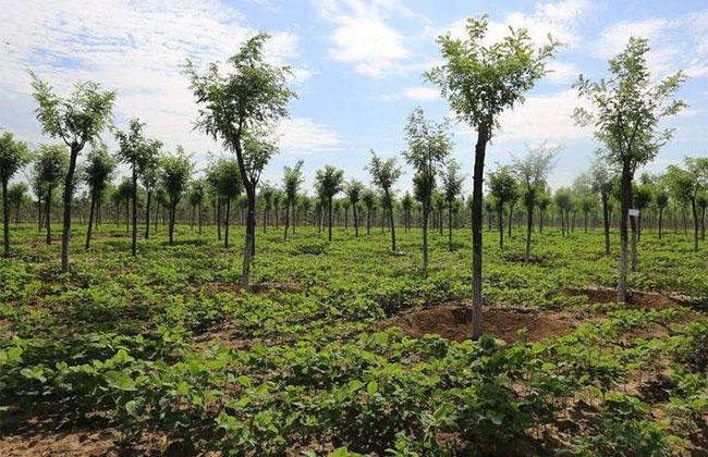 面临转型,园林绿化行业到底该怎么走?