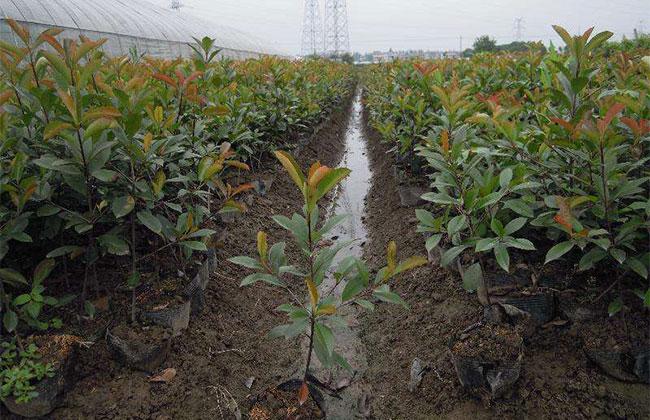 容器苗不直接接触土壤,这么冷的天该如何安全越冬?
