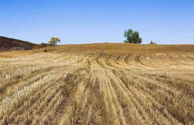 土地承包法再修订,农村农民有好事发生