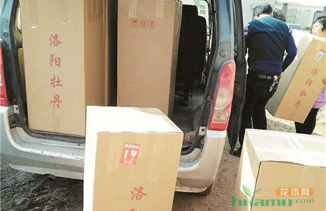 用定制的泡沫箱和纸箱进行包装准备出货的催花牡丹.jpg