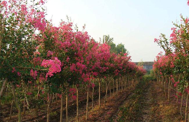 北京花木行业今年需变通发展