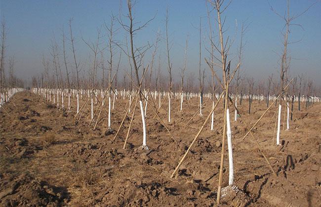 北京万亩造林工程要求提升苗木质量