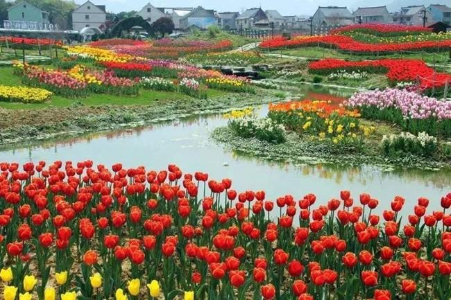 推动苗木花卉产业化,带领村民增收致富