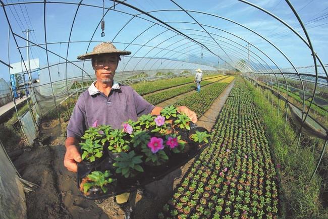 河南新乡村民花卉大棚种植带动乡邻35408437.jpg