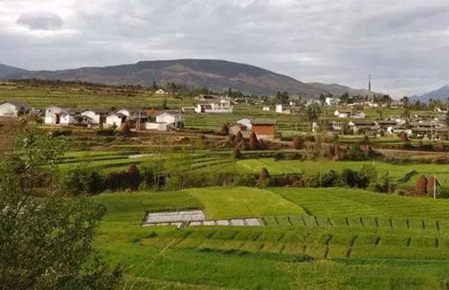 乡村绿化风头正劲,已经取得哪些进展?