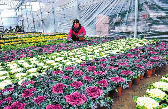 去年年底花卉绿植产业突破千亿人民币