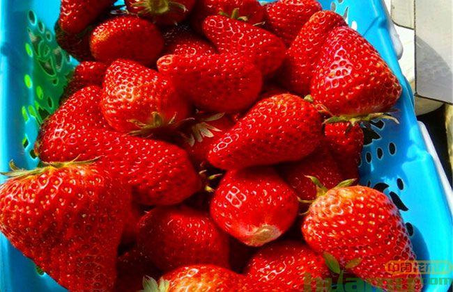 山东甜查理草莓