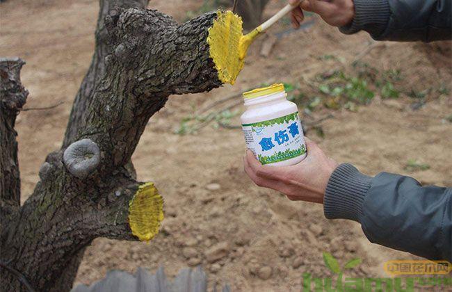 农人分享的保证苗木移栽100%成活的秘诀,赶快学起来!