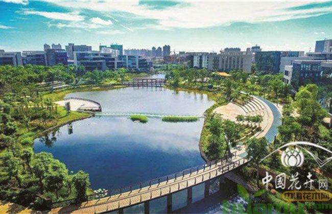 今年投资项目大都与生态建设相关