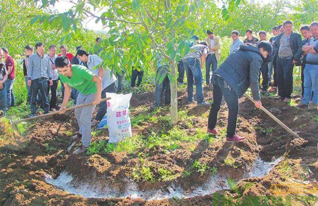 这种方法让苗木移栽成活率大大提高