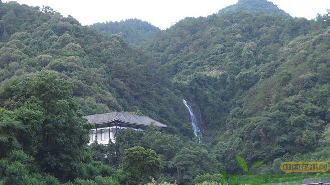"""福建苗木绿化覆盖绿连续40年居我国首位,成为中国最""""绿""""省份"""