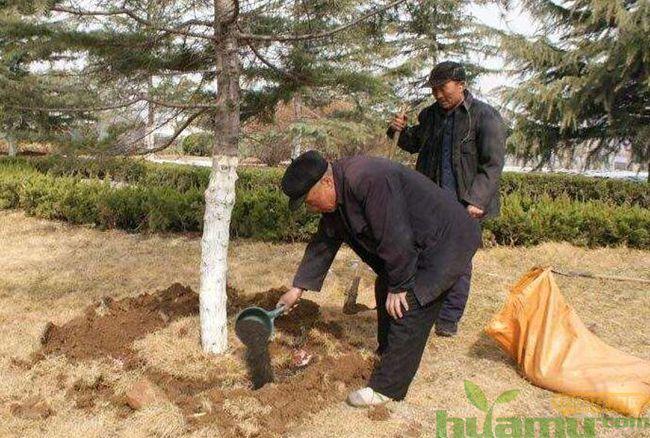 春季苗木施肥管理的注意事项
