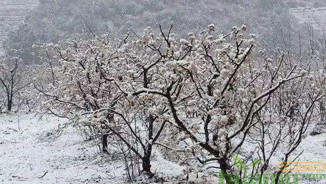 冬天受到冻害的苗木,春季如何养护