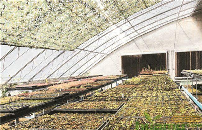 食虫植物市场前景如何?未来可期